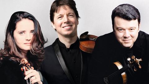 Violin-Special